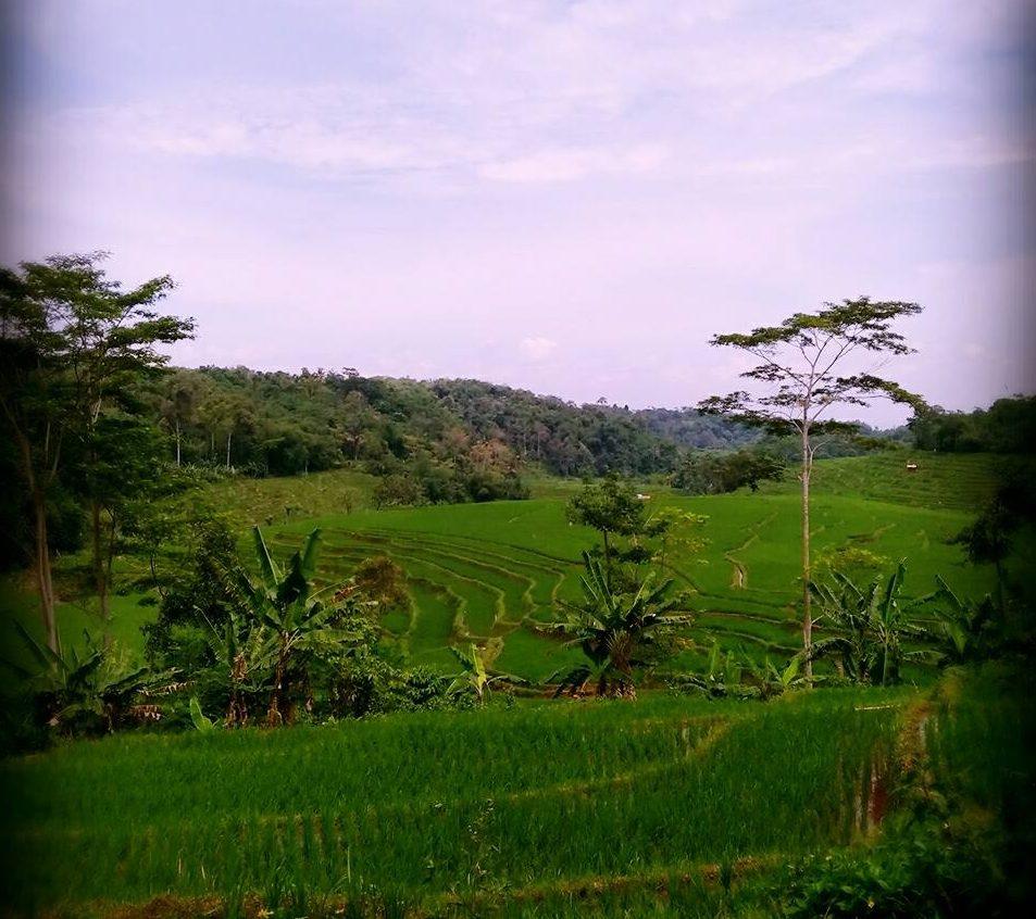 Kampung-Kurma